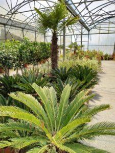 serre plantes exotiques cycas palmier