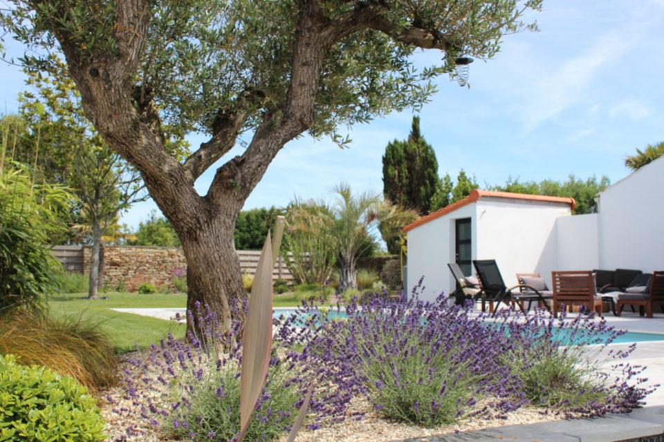 massif olivier et lavandes