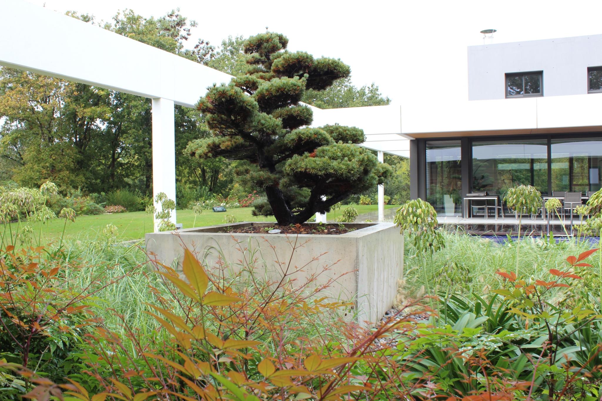 Plantations de beaux sujets marmin paysage for Entretien jardin vendee