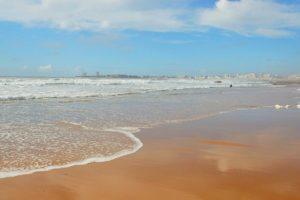 paysagiste les sables d'olonne