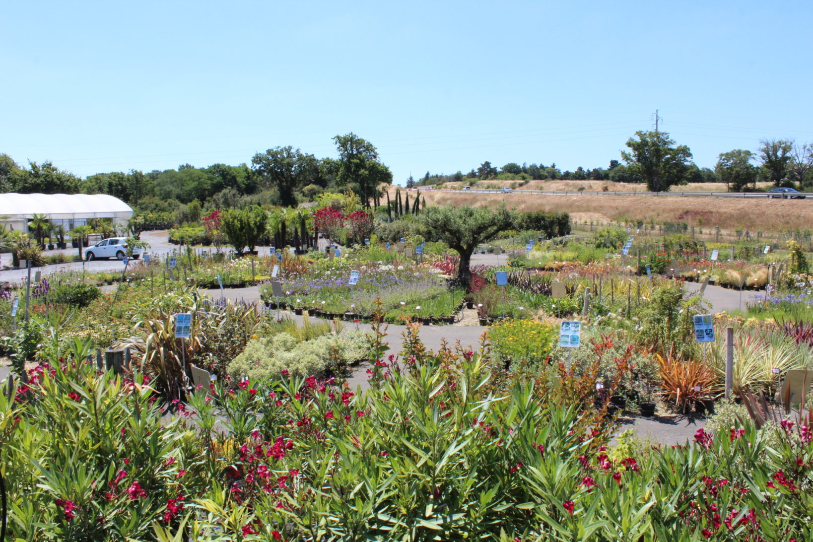 arbustes et fleurs pépinière