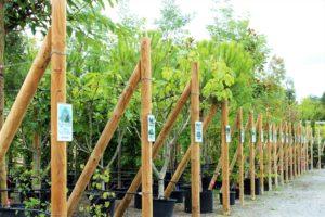 arbre pepiniere marmin jardin vendee