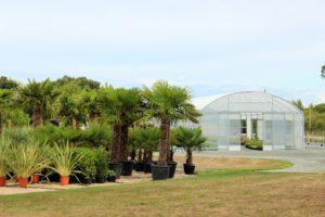 palmiers jardin exotique mediterraneen Marmin