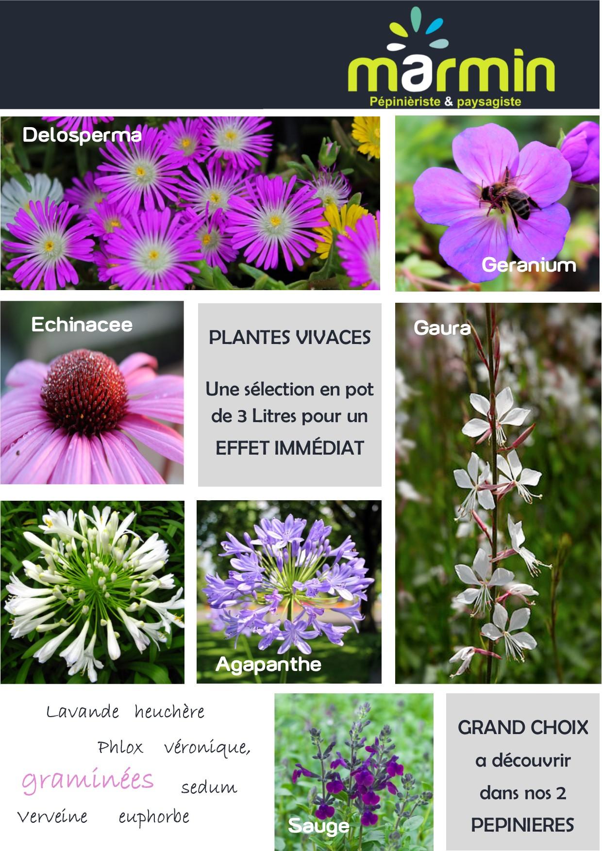 En juin les plantes vivaces fleuries marmin paysage for Plantes fleuries vivaces