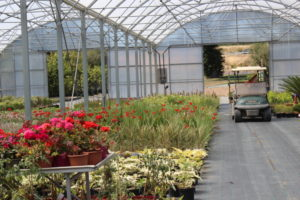 serre de production de végétaux pépiniériste