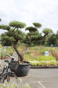 olivier montaigu vendée marmin jardinierie pépinière