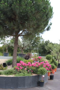 massif plantes marmin paysagiste jardin saint georges de montaigu vendee