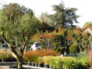 pépinière marmin saint georges de montaigu arbre arbustes vivaces